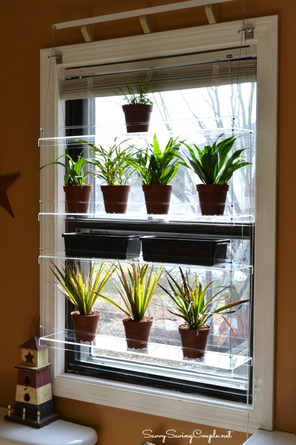 Enhance Your Window S View With Beautiful Views Window Shelves