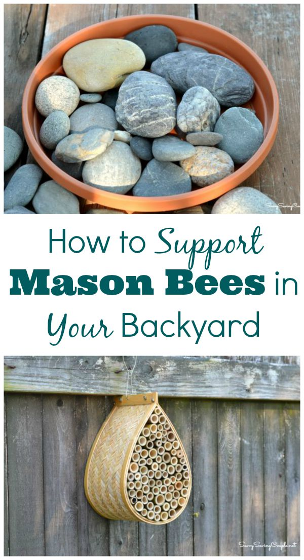 How-to-support-mason-bees